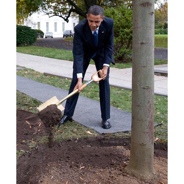Obama-tree_1512408i